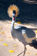 Bird gold crested herons Stock Photos