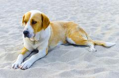 Dog lie on beach sand and looking at the sea Stock Photos