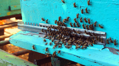 Bees in clues Stock Footage