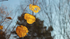 Yellow leaf Stock Footage