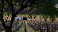Stock Video Footage of Vineyards,South adrica