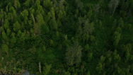 Stock Video Footage of Aerial view of forest wilderness, USA