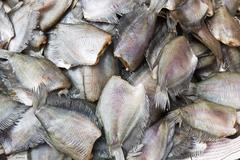 salid fish for sale - stock photo