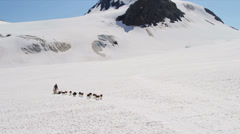 Aerial view of dogsledding  Chugach Mountains, Alaska, - stock footage