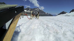 POV view of dogsledding, Alaska, Stock Footage