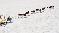 Aerial view Alaskan Malamute dogs used for adventures, USA - stock footage