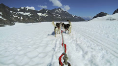 Stock Video Footage of POV Alaskan Husky dogsledding, USA
