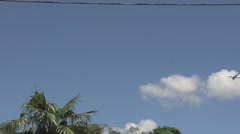 Rio, airplane flying by over palmtree Stock Footage