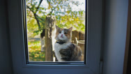 Stock Video Footage of Cat Outside the Window