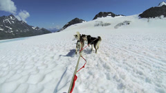 POV Alaskan Husky  dogsledding, USA Stock Footage