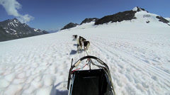 POV view of dogsledding, Alaska, - stock footage