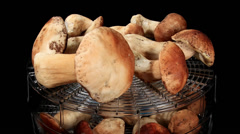 Drying mushrooms in Electric driers on the black background Stock Footage