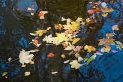 Stock Photo of floating leaves  in autumn