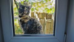 Cat Outside the Window Stock Footage