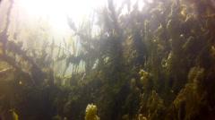 Sun reflected in golden algae Stock Footage