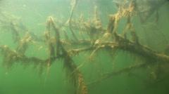 Underwater tree in fresh water Stock Footage