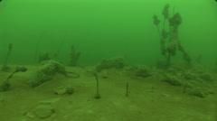 Underwater trees Stock Footage