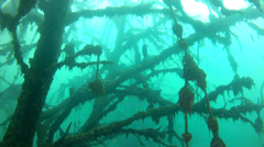 Underwater forest in Quarry Stock Footage