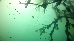 Underwater forest in fresh water Stock Footage