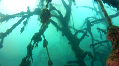 Underwater forest in lake, Stock Footage
