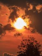Dark silhouette of a tree against orange sunset Stock Photos