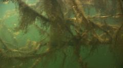 Underwater tree Stock Footage