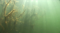 Underwater wood and sunshine Stock Footage