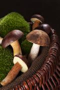 delicious edible boletus mushrooms. - stock photo