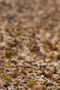 Single withered leaf on a stalk with floor of fallen leaves in background Stock Photos