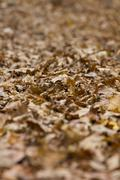 Deep layer of withered fallen leaves lying on the ground Stock Photos