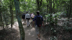 Jungle Walkway Stock Footage
