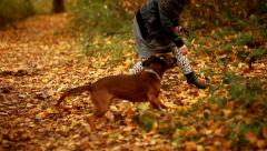 Playing with dog in park - stock footage