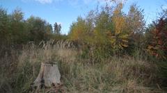 tree stump in autum - stock footage