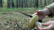 Stock Video Footage of Turning an edible mushroom in hand
