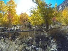 fall colours eastern sierras - stock photo