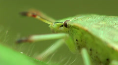 Macro, eyes and whiskers green garden beetle bug - stock footage