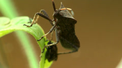 Big and small bugs on blade of grass, macro Stock Footage