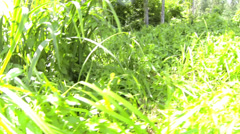 Plenty of shrubs; grasses and some trees in the area Stock Footage