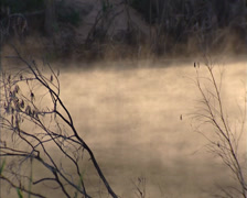 Early morning mist on Katherine River bordered by monsoon rainforest Stock Footage