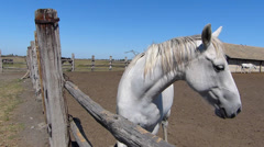 Horse Farm, Lipizzaner Stock Footage