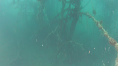 Underwater forest in lake Stock Footage