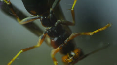 Wasp bug insect 1 Stock Footage