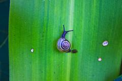 Small snail resting on  green leaves Stock Photos