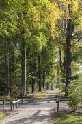 Autum forest Stock Photos