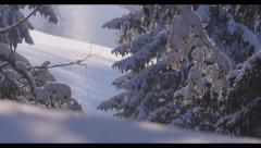 Snowy Trees 3 Stock Footage