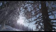 Stock Video Footage of Snowy Trees 2