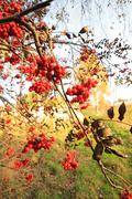 Beautiful autumnal landscape in the park Stock Photos