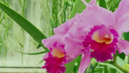 Stock Video Footage of Colorful, radiant flowers (3 of 4)