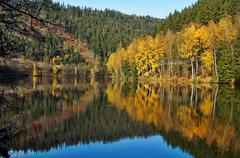 Trees with autumn leaves gold mirror above the surface of the pond Stock Photos
