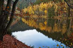 Trees with autumn leaves mirror above the surface of the pond Stock Photos